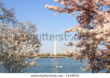 Cherry blossom trees blooming around the Tidal Basin in Washington, DC, USA. - stock photo