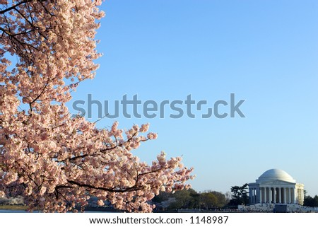 Cherry blossom trees in bloom around the Tidal Basin in Washington, DC. - stock photo