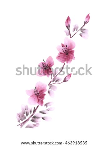Cherry blossom / Watercolor painting. Branch with pink spring flowers on a white background. Isolated.