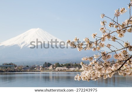Cherry Blossom with Mt Fuji at lake Kawaguchiko  - stock photo