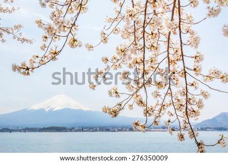 Cherry Blossom with Mt Fuji at lake Kawaguchiko - stock photo