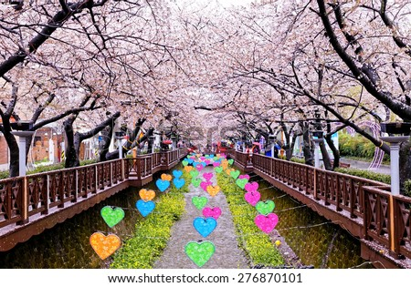 cherry blossoms at day busan city in south korea - stock photo