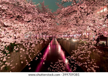 Cherry Blossoms at night in Tokyo - stock photo