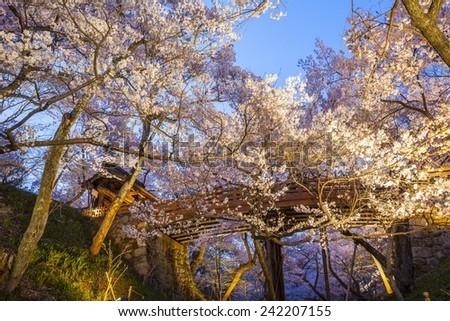 Cherry blossoms at Takato Castle Site Park, Nagano, Japan - stock photo