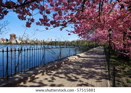 Cherry Blossoms at the Central Park Reservoir - stock photo