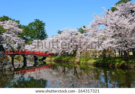 Cherry blossoms at the Hirosaki Castle Park in Hirosaki, Aomori, Japan - stock photo