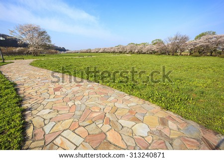 Cherry blossoms bloom path of Kitakami Tenshochi, Iwate, Japan - stock photo