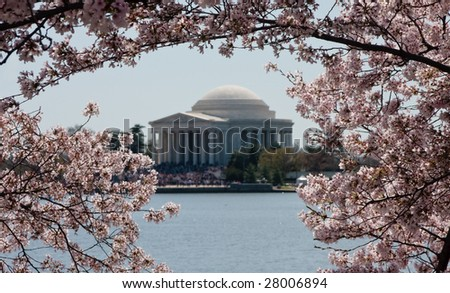 Cherry Blossoms in focus surrounding a slightly out of focus image of Jefferson Memorial - stock photo