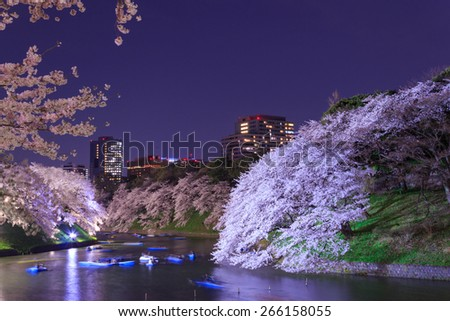 Cherry blossoms in the twilight at Chidori-ga-fuchi in Tokyo - stock photo