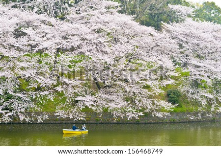Cherry blossoms on the moat around  Chidorigafuchi imperail and people on boat - stock photo