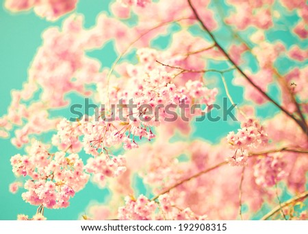 Cherry blossoms over turquoise sky - stock photo