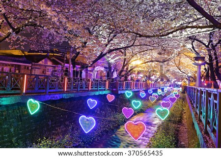 cherry blossoms sakura at night, busan city in south korea - stock photo