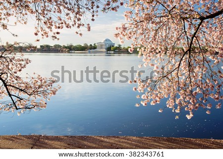 Cherry blossoms sunrise in Washington DC around the Tidal Basin - stock photo
