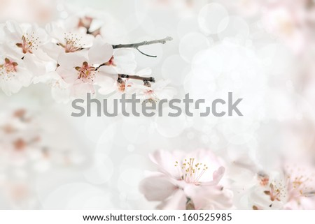 Cherry blossoms with lights and bokeh - stock photo