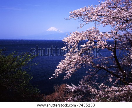 Cherry blossoms with Mount Fuji - stock photo