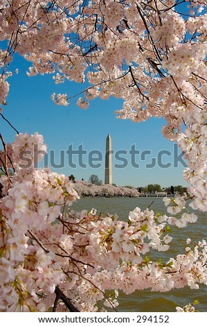 Cherry Blossums on the Tidal Potomac Frame the Washington Monument