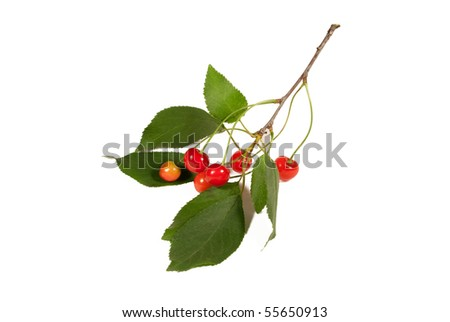 Cherry branch  isolated on the white