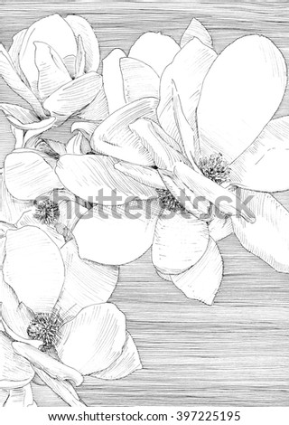Cherry flowers. Black and white dashed style sketch, line art, drawing with pen and ink. Retro vintage picture. - stock photo