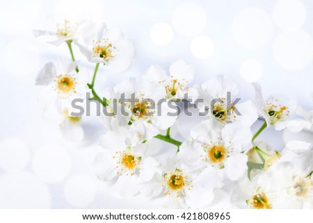 Cherry flowers blossom poster, floral wallpaper,  soft blurred style with special light effects