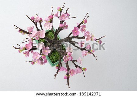 Cherry on a white background. Pink flowers - stock photo