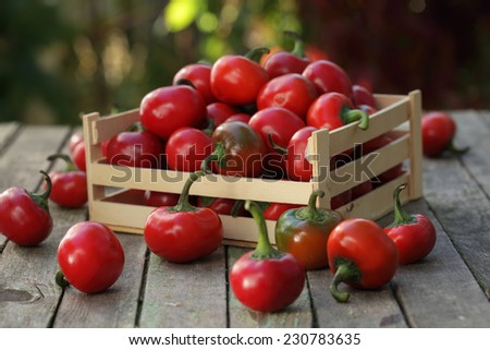 Cherry pepper / Red cherry chillies on wooden background