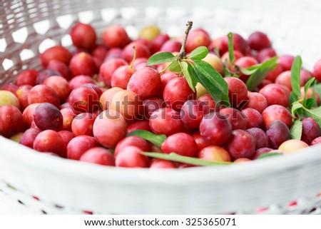 Cherry plums (Prunus cerasifera) - stock photo