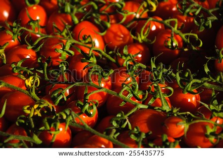Cherry tomatoes at Rialto Food Market in Venice. Selective focus and shallow depth of field. Bokeh. A game of golden sunlight and shadow. - stock photo