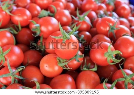 Cherry tomatoes Fresh ripe crop on a large table