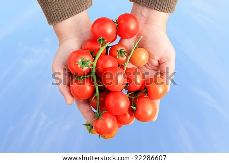 Cherry tomatoes in human hands on the blue sky background - stock photo