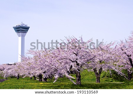 Cherry tree and the tower in Japan - stock photo