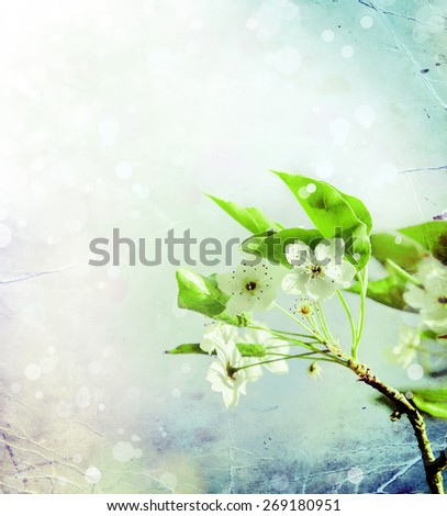 Cherry tree Blossom over nature background/ Spring flowers/ Spring bloom Background, romantic white flowers. - stock photo