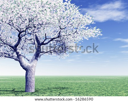 Cherry-tree blossoming