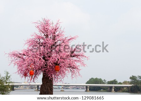 Cherry tree decorated with red lanterns to celebrate Chinese New Year and Bridge across the river