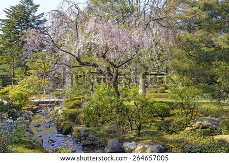 Cherry tree in Kenroku-en garden in Kanazawa, Japan Kenroku-en is an old private garden. Is one of the Three Great Gardens of Japan and are open year-round during daylight hours. - stock photo
