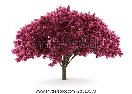 cherry tree isolated on white background with clipping path - stock photo
