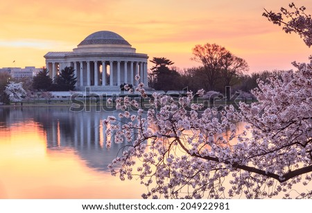 Cherry trees bloom in spring in Washington DC near the Jefferson Memorial reflecting in the water of the tidal basin at sunrise. - stock photo