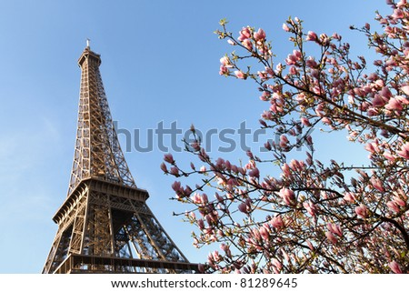 Cherry trees blooming by the Eiffel Tower in early spring - stock photo