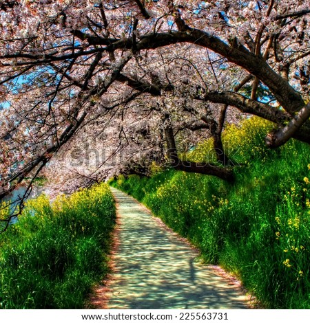 Cherry trees overhang a path surrounded with green foliage. - stock photo