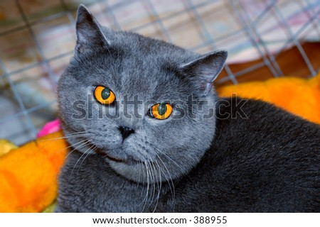 cat body carrier