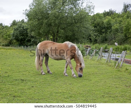 Chesterfield,UK,June 20th 2016,Light Chestnut coloured horse in a field by the Chesterfield Canal