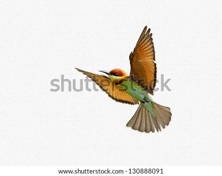 Chestnut-headed Bee-eaters in flight - stock photo