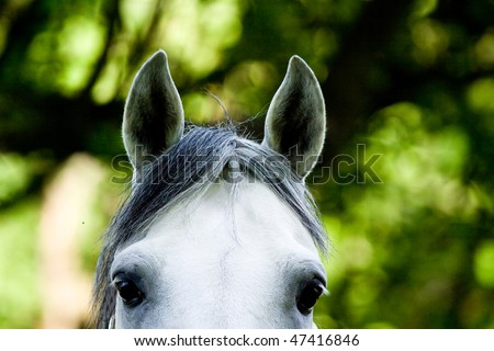 Chestnut Horse in a Green Meadow in sunny day - stock photo