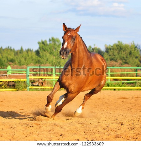 chestnut horse in paddock - stock photo