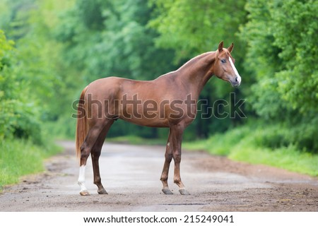 Chestnut horse standing on a road - stock photo