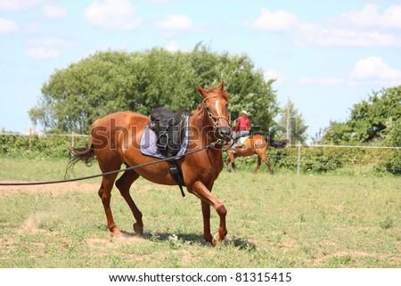 Chestnut horse trotting - stock photo