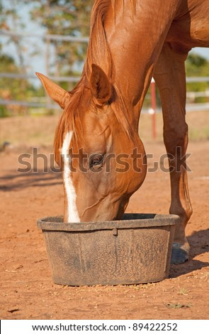 Chestnut horse with a blaze eating his dinner in a black rubber feeder - stock photo