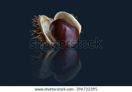 Chestnut  on a dark background. Isolated with path. - stock photo