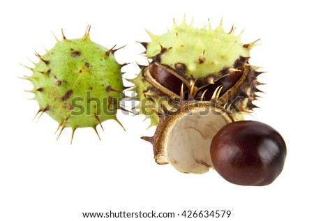 chestnut on a white background closeup - stock photo