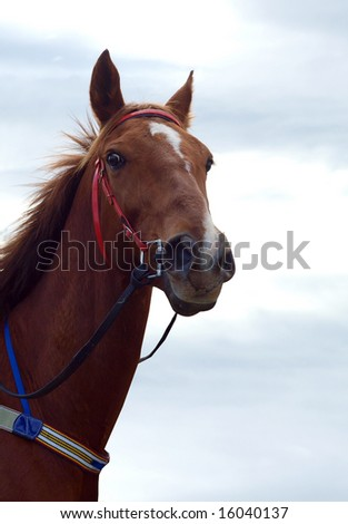 Chestnut Racehorse against the sky