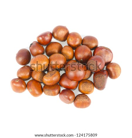 Chestnut seed isolated on white background - stock photo